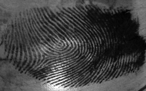 Onion fingerprint
